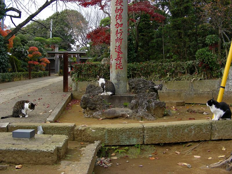 参道を歩いて集合した猫たち2