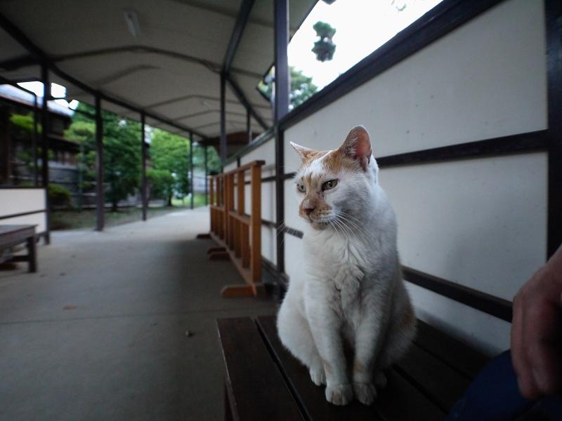 通路と白茶猫1