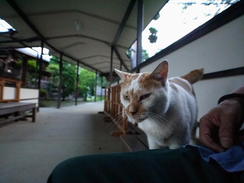 通路と白茶猫2