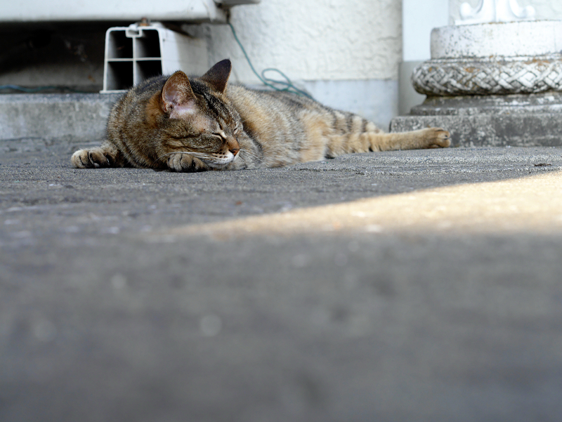 口の周りが白いキジトラ猫1