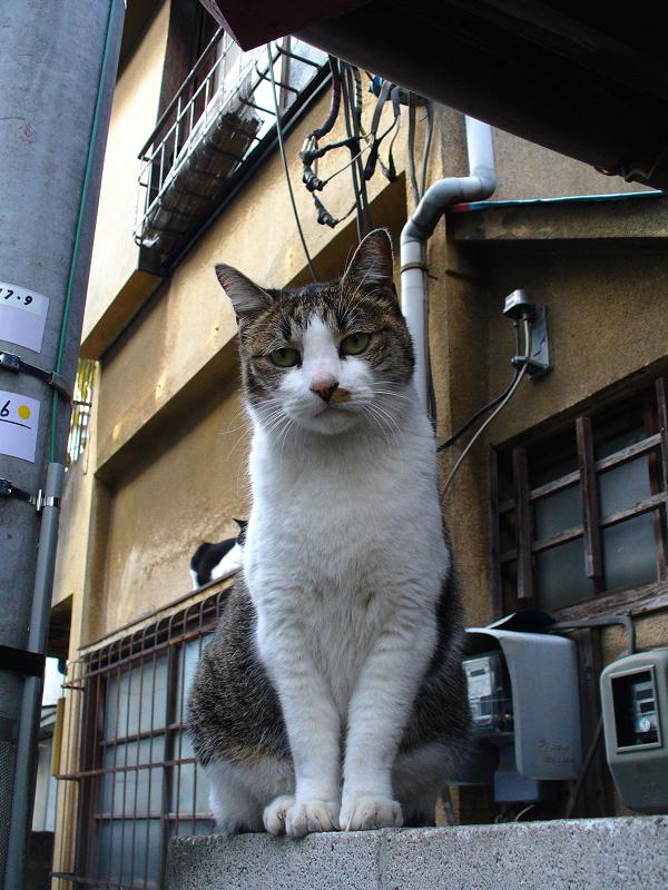 ブロック塀の路地猫1