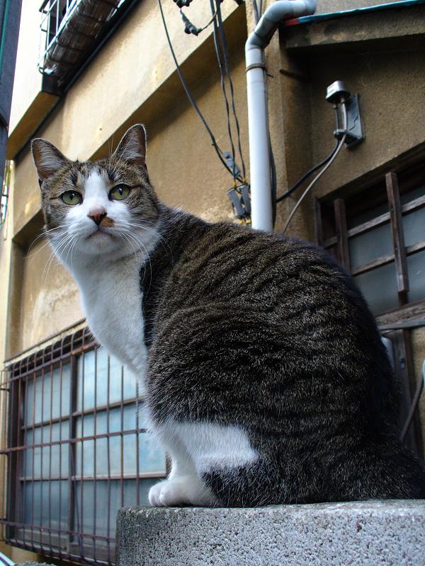 ブロック塀の路地猫2