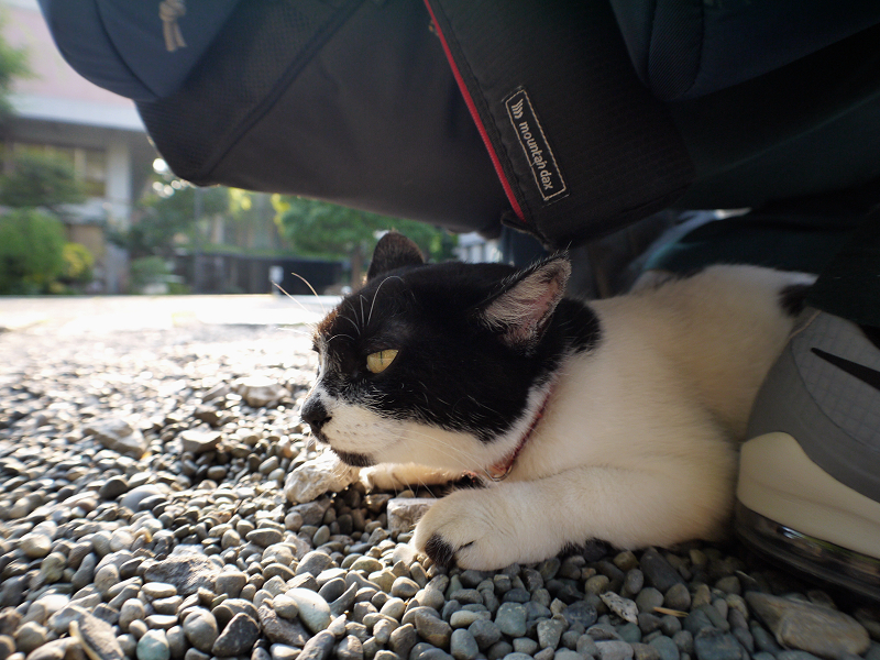 久し振りに尻の下に入った白黒猫