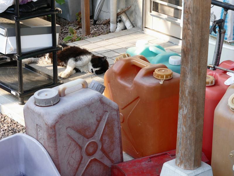 ポリタンクと黒白猫