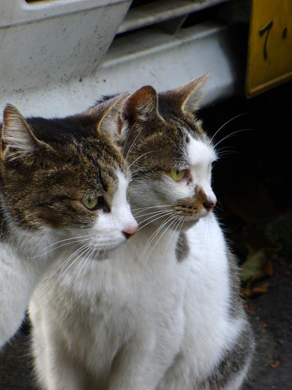 路地で出会える義理姉妹猫1