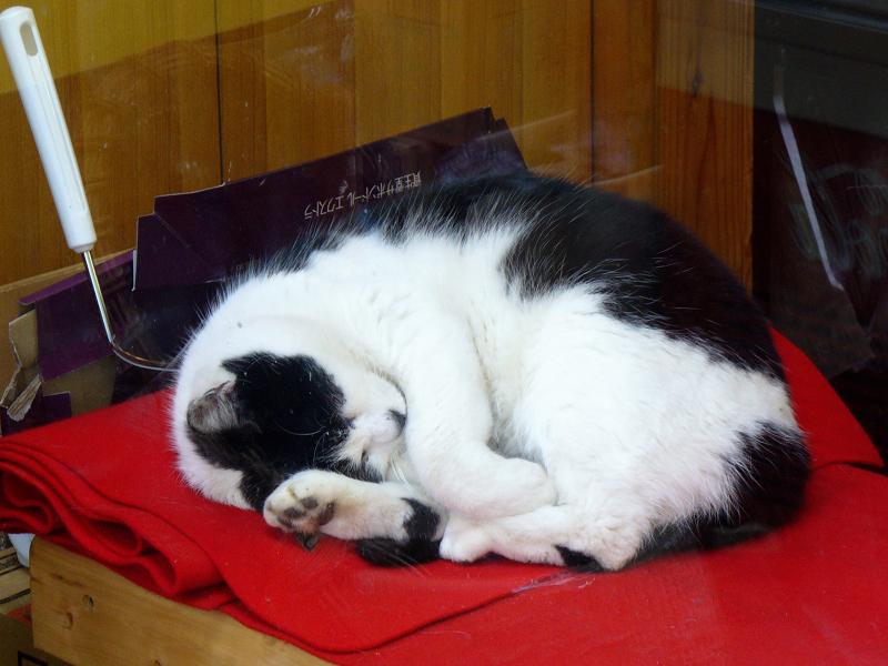 緋毛氈の上で寝ている黒白猫