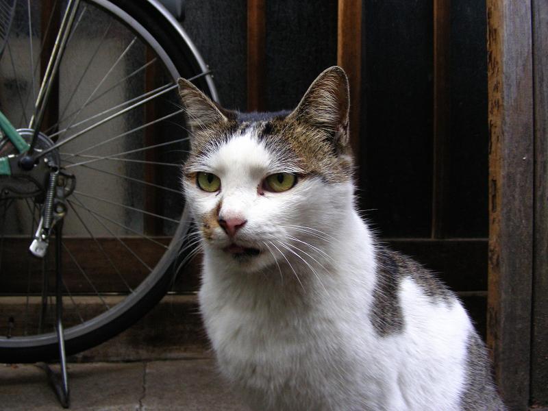 路地で出会える義理姉妹猫2