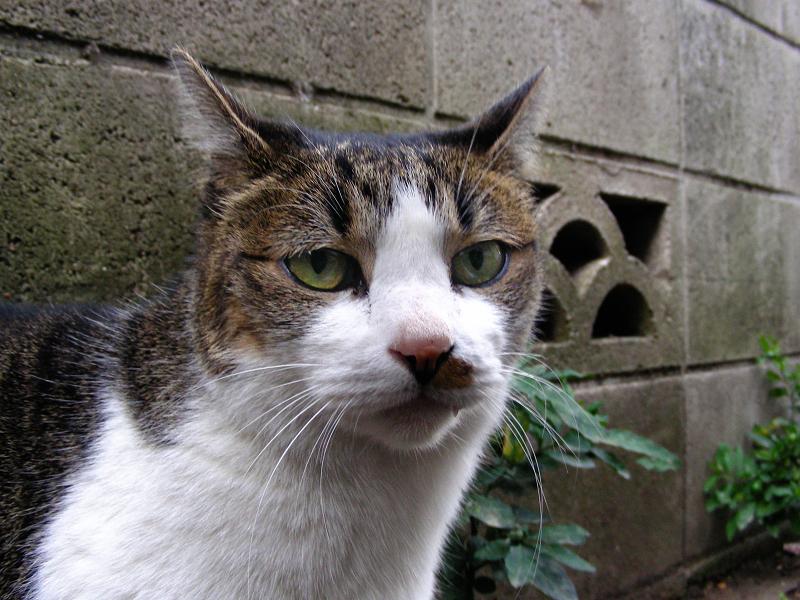 路地で出会える義理姉妹猫3