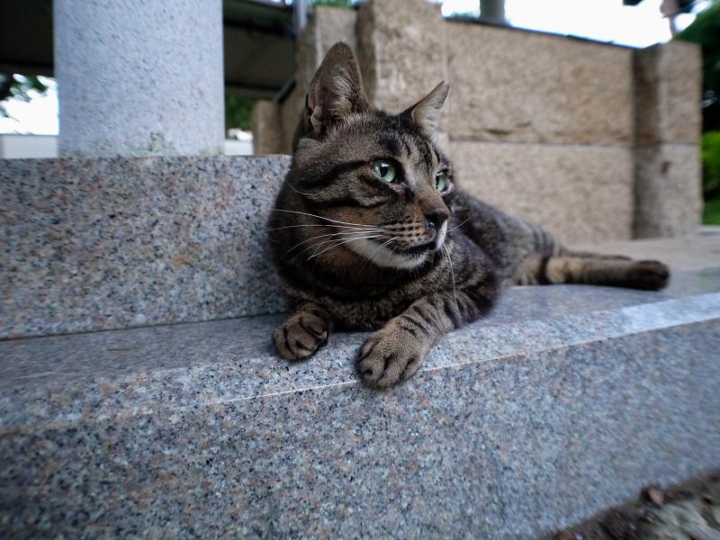 井戸とキジトラ猫