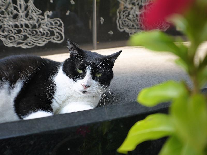 黒御影石の前でお休みする黒白猫1