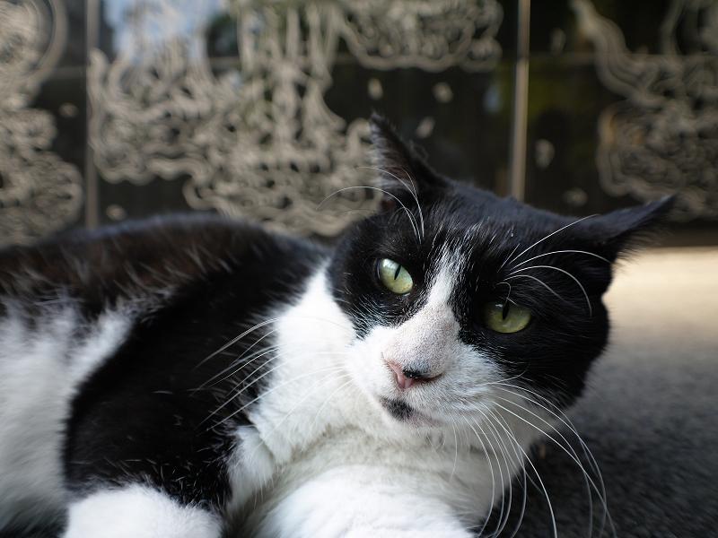 黒御影石の前でお休みする黒白猫2