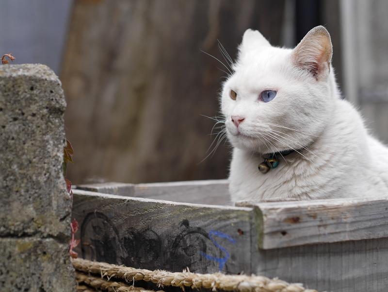 木箱と白猫