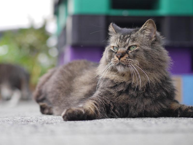 コンテナと毛長の猫1