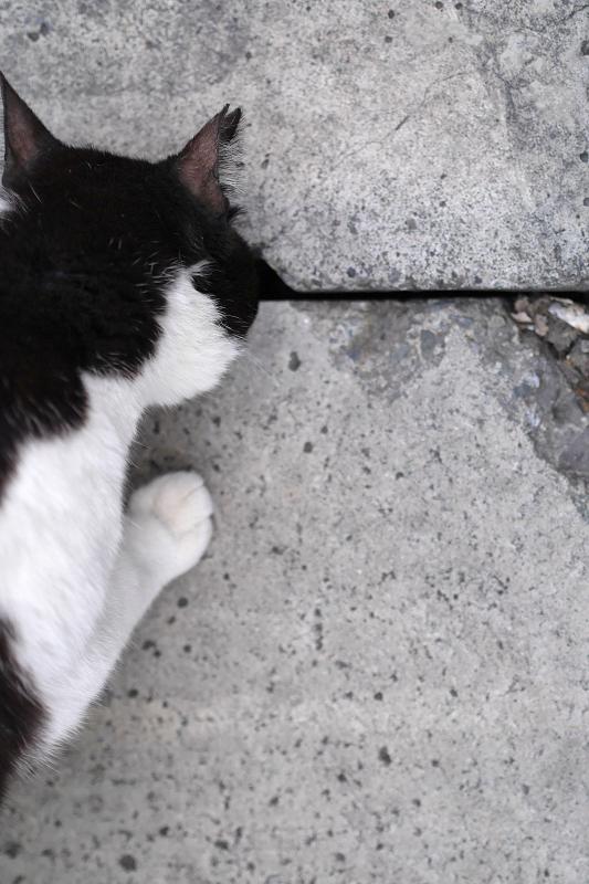 側溝の蓋と黒白猫1