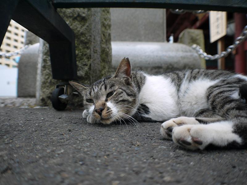 山門とキジ白猫2