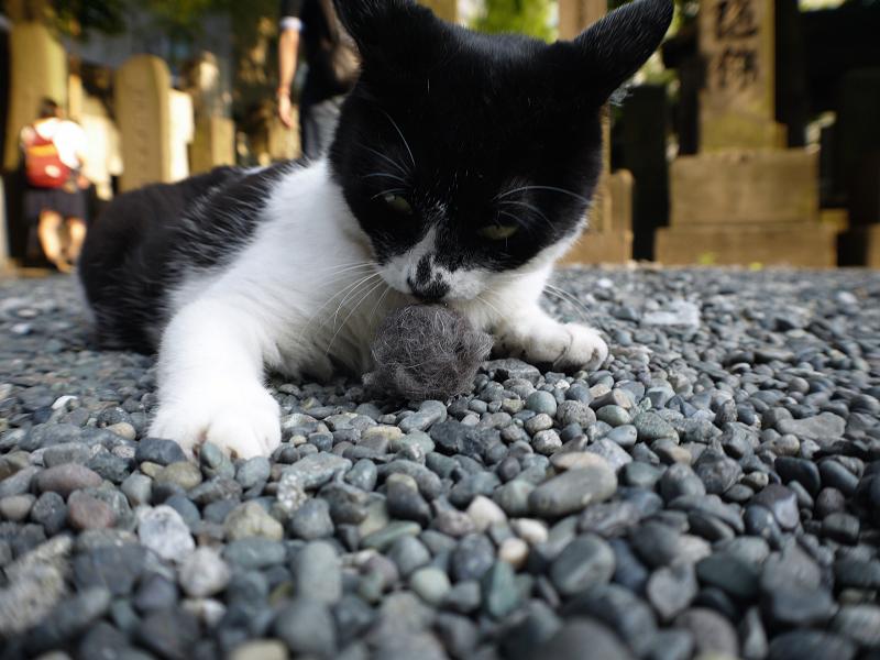 抜け毛玉を嗅ぐ白黒猫1