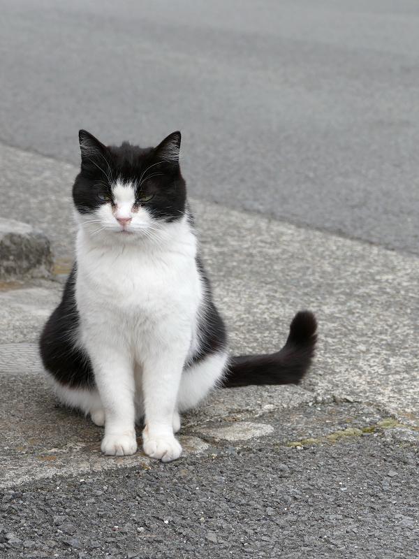 カギしっぽ黒白猫
