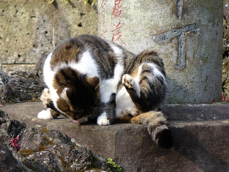 参道石柱とキジ白猫1
