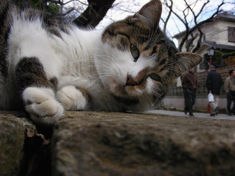 参道石柱とキジ白猫2