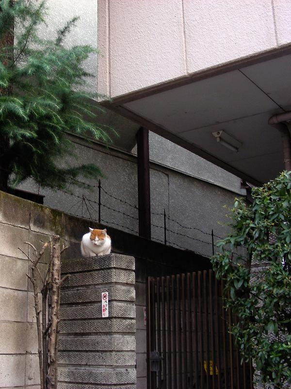 茶白猫と門扉1