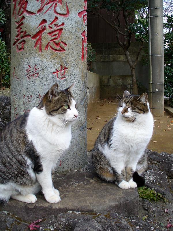 参道石柱と2匹のキジ白猫1