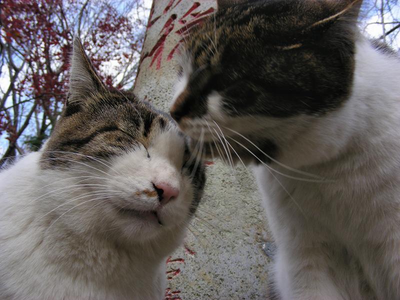 参道石柱と2匹のキジ白猫3