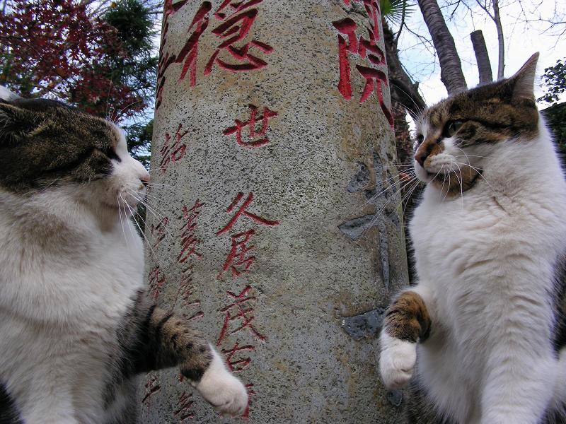 参道石柱と2匹のキジ白猫4