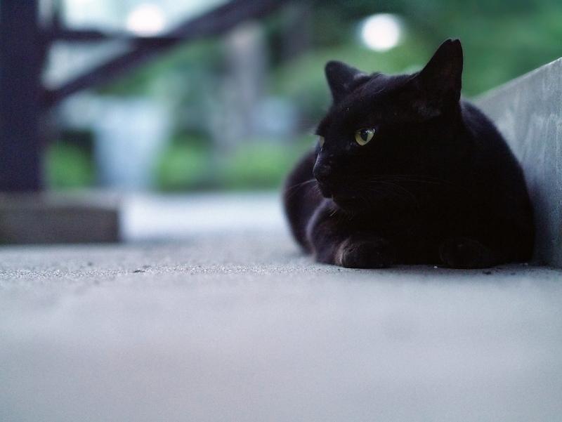夕暮れ階段の黒猫1