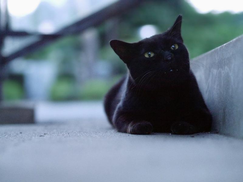 夕暮れ階段の黒猫2