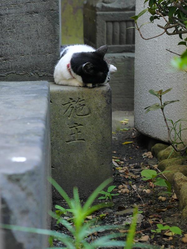 石碑の間の白黒猫1