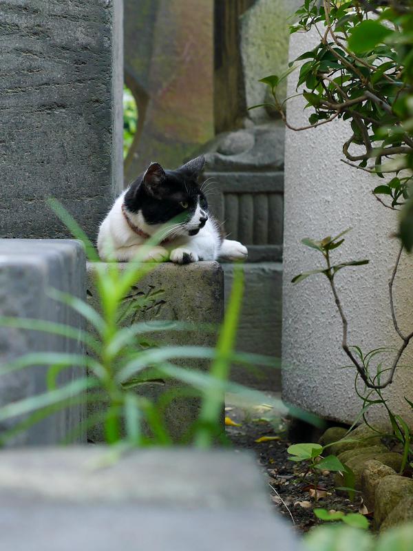 石碑の間の白黒猫2
