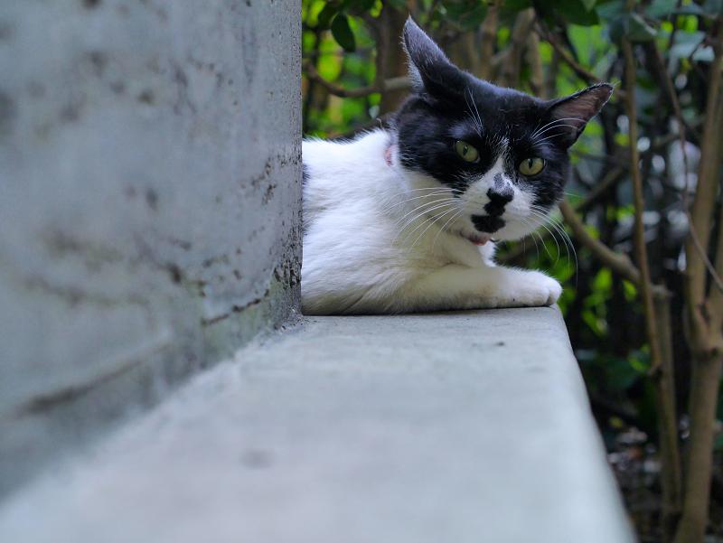 石碑の間の白黒猫3