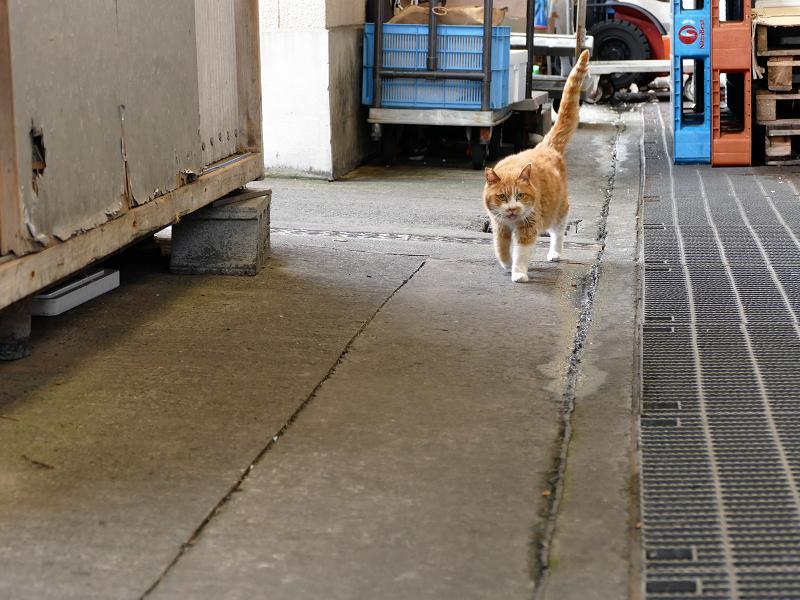 漁港の茶白猫2