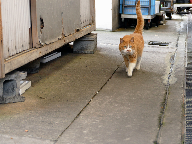 漁港の茶白猫3
