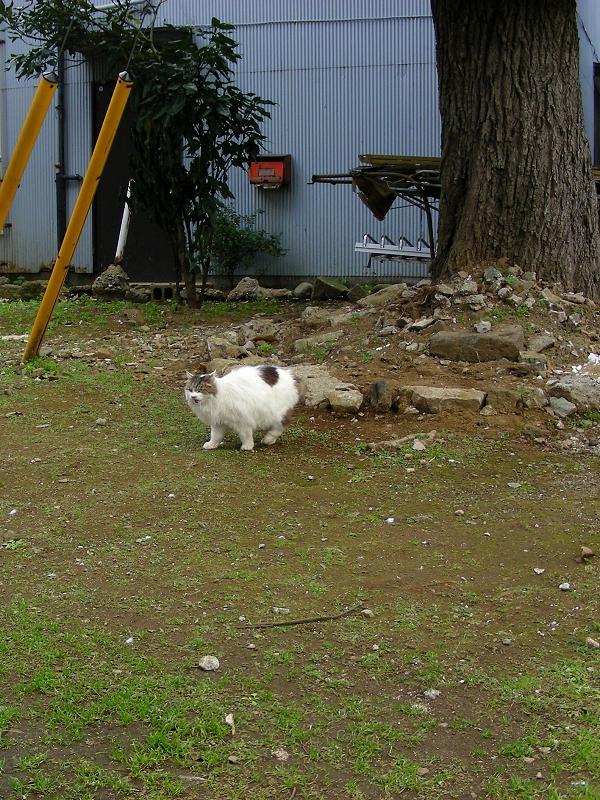 大木の下で何かを隠してた毛長の猫2