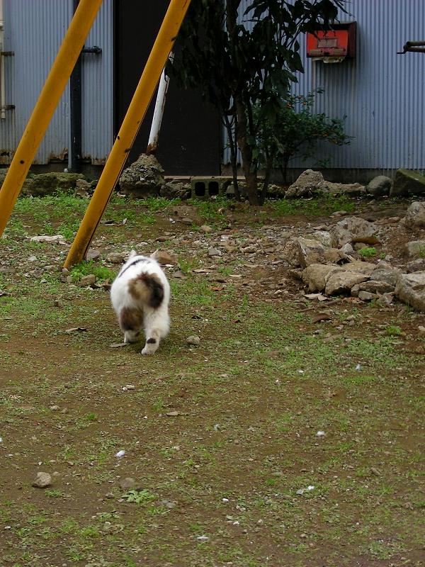 大木の下で何かを隠してた毛長の猫3