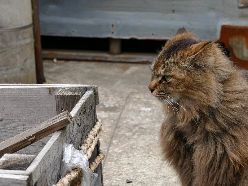 木箱とゴージャス柄猫