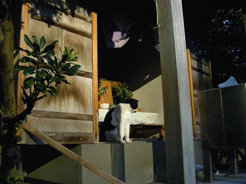 祠の黒白猫1