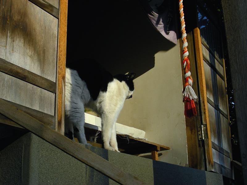 祠の黒白猫2