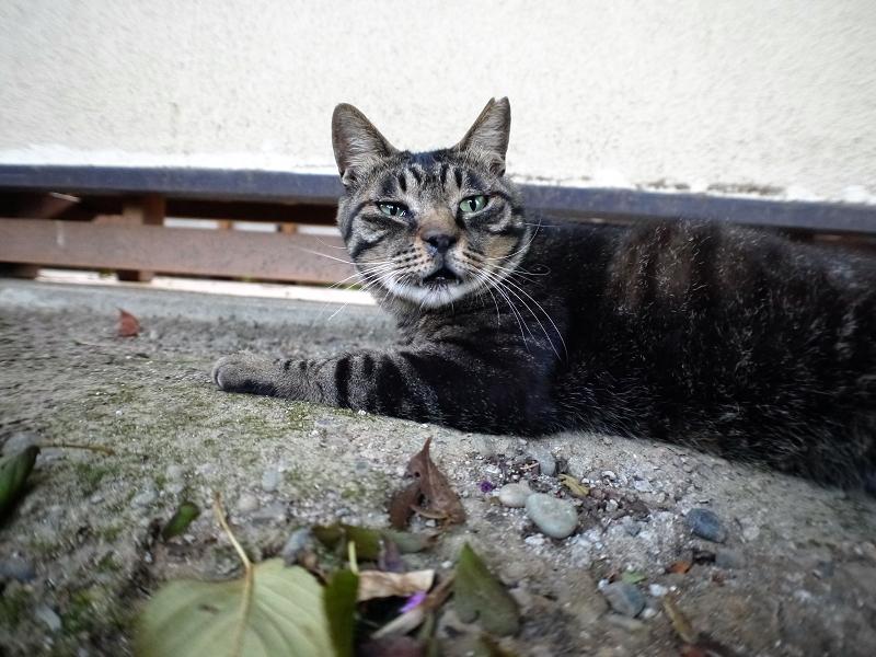 城壁とキジ猫2