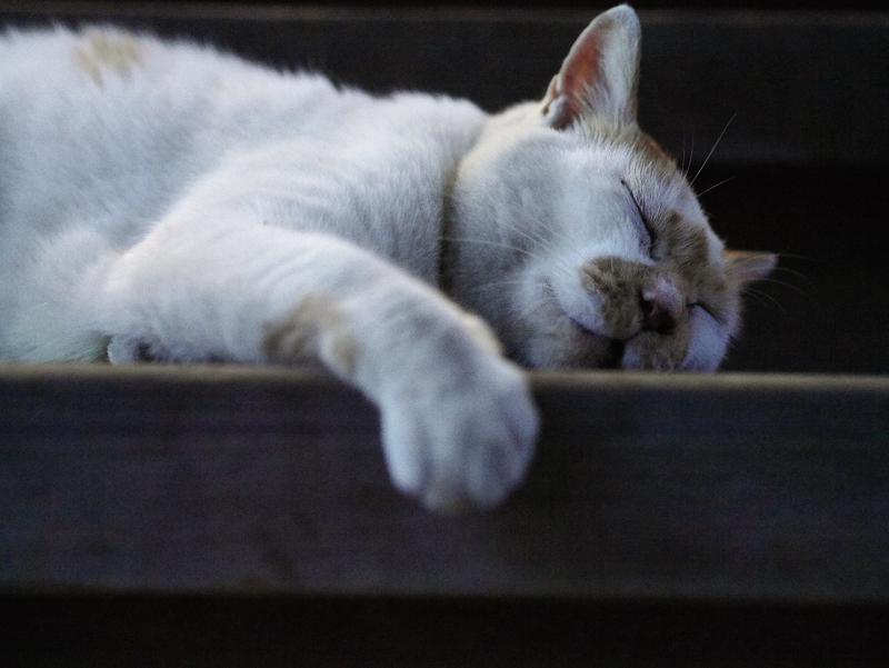 階段で熟睡している茶白猫