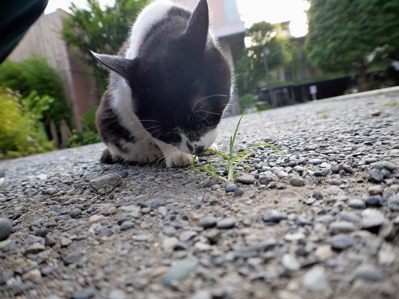 境内の白黒猫2