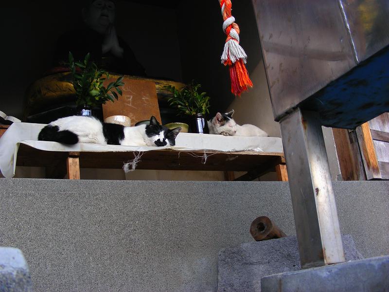 祠の黒白猫と白キジ猫2