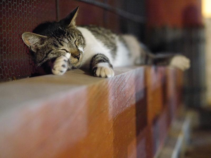 門の下で寝ているキジ白猫1