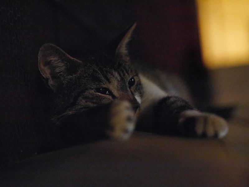 門の下で寝ているキジ白猫2