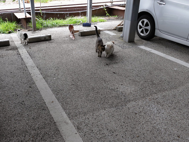駐車場へ出てきた猫たち