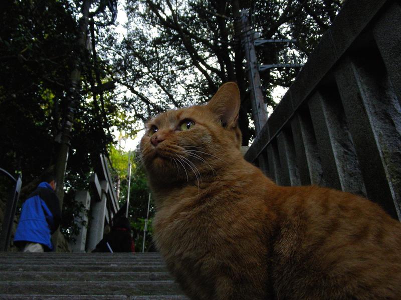 玉垣階段の茶トラ猫