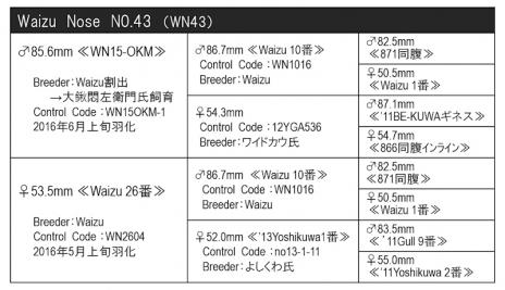 WN43血統構成表800