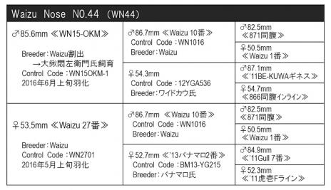 WN44血統構成表800