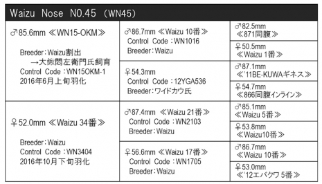 WN45血統構成表800